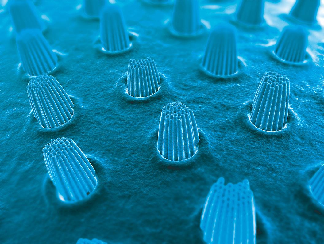 celulas-oido-interno-GA