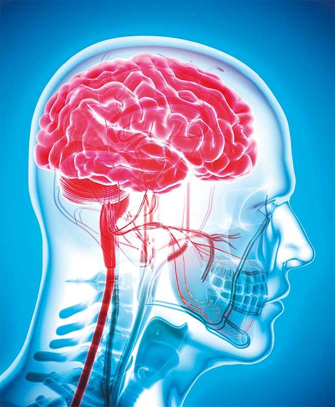 cerebro-conexiones-GA
